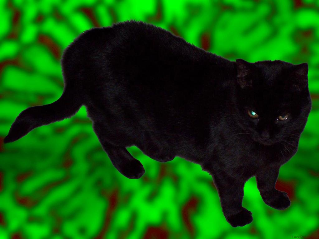 Daftar Cat Wallpaper Xbox One Wallpaper Kerang